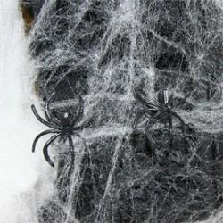 Toile d'Araignée + Araignée
